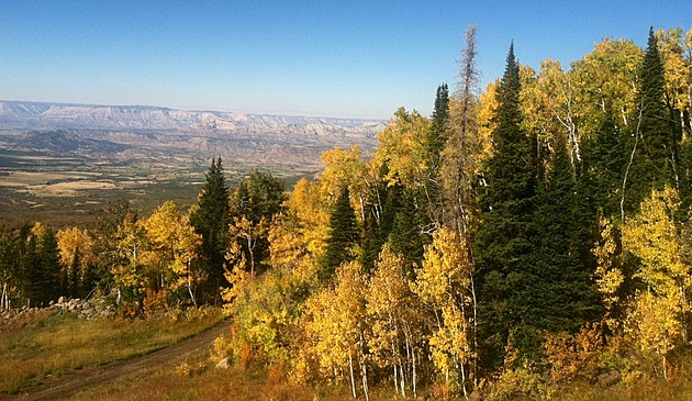 See All of The Fall Colors on a Drive Through The Grand Mesa Byway